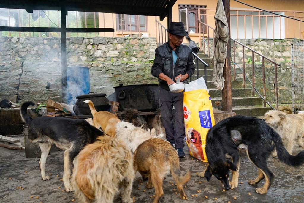 Feeding dogs, Small Grants