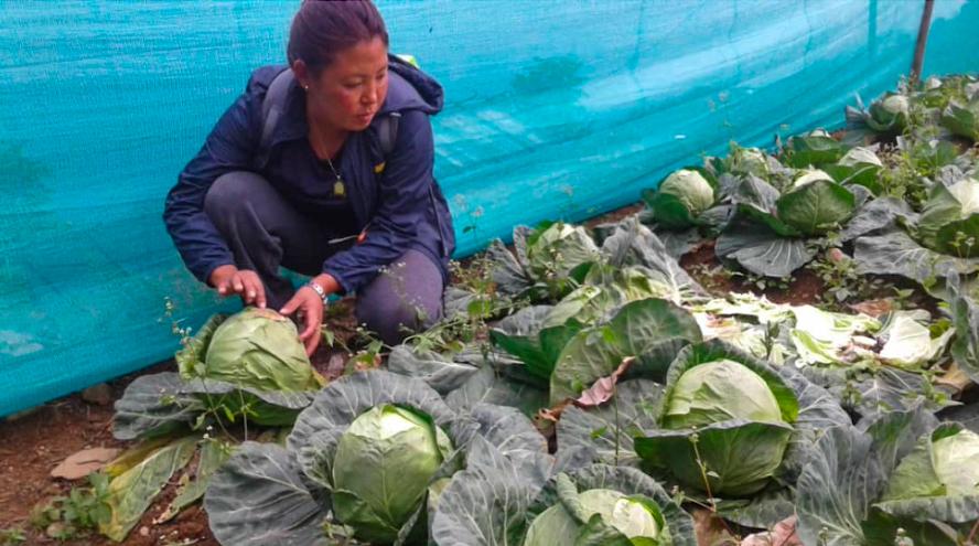 Nutrient-rich vegetables in Ngawang Dramtoe, Samtse