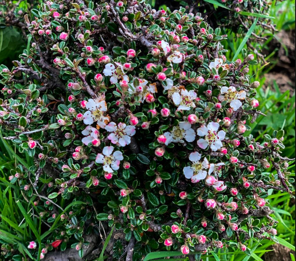 Herbs in Shingkhar, Bumthang
